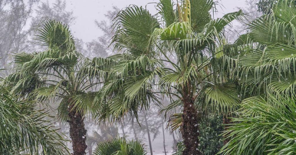 Weather Phuket Forecasts